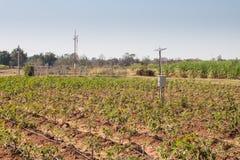 Agricultura e Internet das coisas, fazendeiro esperto foto de stock royalty free