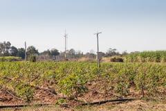 Agricultura e Internet das coisas, fazendeiro esperto fotos de stock royalty free