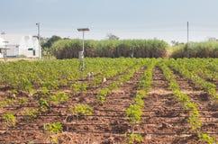 Agricultura e Internet das coisas, fazendeiro esperto imagens de stock royalty free
