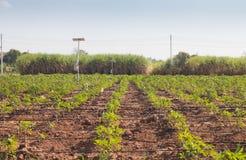 Agricultura e Internet das coisas, fazendeiro esperto imagem de stock royalty free