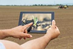 Agricultura elegante Granjero que usa el establecimiento del maíz de la tableta AGR moderna Imagen de archivo libre de regalías