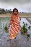 Agricultura em India imagens de stock royalty free