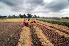 Agricultura em India foto de stock