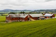 Agricultura em Noruega. Foto de Stock Royalty Free
