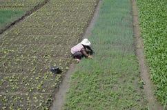 Agricultura en China Imágenes de archivo libres de regalías