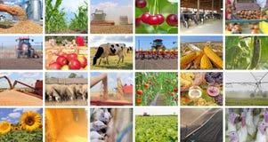 Agricultura en collage foto de archivo