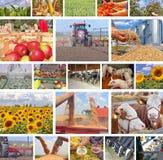Agricultura en collage imagen de archivo libre de regalías