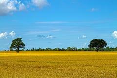 Agricultura en Dinamarca Fotos de archivo libres de regalías