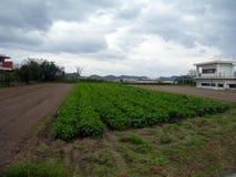 Agricultura en Japón Fotos de archivo