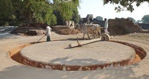 Agricultura en la India foto de archivo libre de regalías
