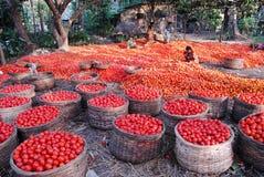 Agricultura en la India fotografía de archivo libre de regalías