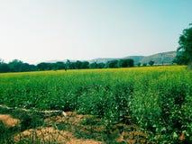 Agricultura en la India imagen de archivo