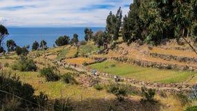 Agricultura en la isla de Taquile, en el lago Titicaca Imágenes de archivo libres de regalías