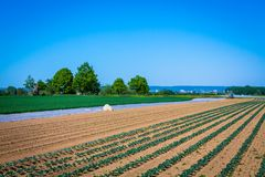 Agricultura en la primavera Foto de archivo libre de regalías