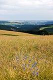 Agricultura en las colinas en verano Imagen de archivo libre de regalías