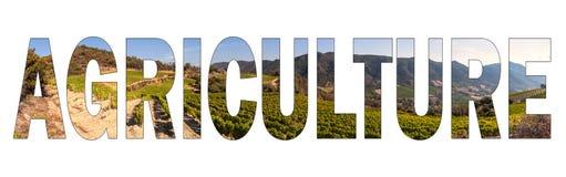 AGRICULTURA escrita com fundo um vinhedo montanhoso de Sardinia, Itália fotografia de stock royalty free