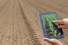 Agricultura esperta Fazendeiro que usa a plantação do milho da tabuleta AGR moderna foto de stock royalty free