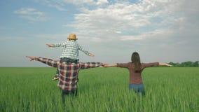 Agricultura, familia joven con el muchacho del niño en hombros con los brazos al paseo lateral en campo de grano verde metrajes