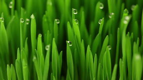 Agricultura: 4 fases de alimento biológico del crecimiento almacen de video