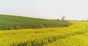 Agricultura, fazendeiro masculino que anda na trilha sobre o campo agrícola ao usar a tabuleta digital video estoque