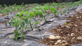 Agricultura, filme cultivado da palha de canteiro do campo vídeos de arquivo