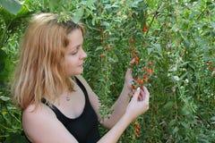 Agricultura, fruto de baga do goji e moça fotos de stock royalty free