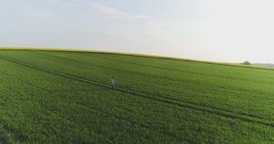 Agricultura, granjero de sexo masculino que camina en pista sobre campo agrícola mientras que usa la tableta digital metrajes