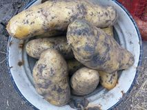 A agricultura, hidrato de carbono, cozinhando, dieta, come, cultiva, alimento, colheita, ingrediente, metal, natureza, nutrição,  Imagem de Stock Royalty Free