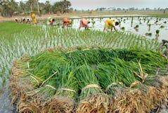 Agricultura india Fotos de archivo libres de regalías