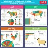 Agricultura, infographics da produção animal, ilustrações do vetor Imagens de Stock Royalty Free