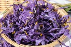 A agricultura italiana, flores do açafrão pôs para secar em uma cesta Fotografia de Stock Royalty Free