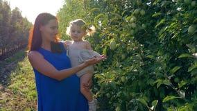 A agricultura, mamã de sorriso com a filha pequena alegre nas mãos colhe no jardim da maçã entre fileiras das árvores em brilhant video estoque