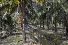 Agricultura misturada do coco da opinião de parque natural fotos de stock
