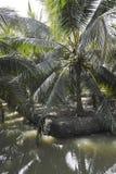 Agricultura misturada do coco da opinião de parque natural imagem de stock royalty free