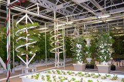 Agricultura moderna cada vez mayor de las verduras del tubo Foto de archivo libre de regalías