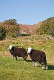 Agricultura montañosa Imagen de archivo libre de regalías