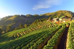 Agricultura montañosa encendido Imagen de archivo libre de regalías