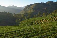 Agricultura montañosa encendido Imagenes de archivo