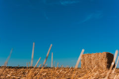 Agricultura - monte de feno Fotos de Stock