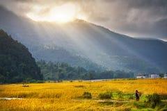 Agricultura no campo do arroz nos Himalayas imagens de stock