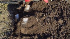agricultura O carro do fazendeiro Moinhos do cultivador que aram a terra vídeos de arquivo