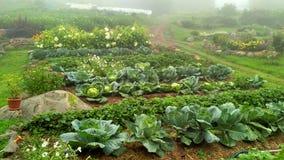 Agricultura orgánica en el highlands_2 Imagen de archivo libre de regalías