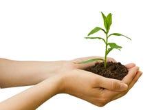 Agricultura. planta en una mano Imagen de archivo libre de regalías