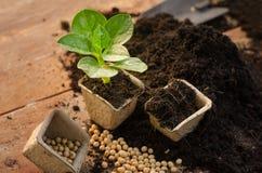 Agricultura, planta, semilla, almácigo, planta que crece en el pote de papel fotos de archivo libres de regalías