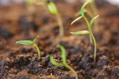 agricultura Plantas crescentes Plântula da planta Entregue as plantas novas de consolidação e molhando do bebê que crescem na ger fotos de stock royalty free