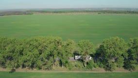 Agricultura Tiro verde de la antena del campo almacen de metraje de vídeo