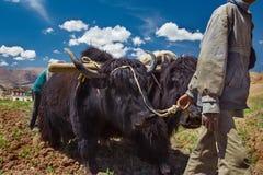 Agricultura tradicional Fotografia de Stock Royalty Free
