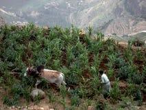 Agricultura tradicional Imagens de Stock Royalty Free