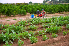 Agricultura tradicional da pequena propriedade do campo de Godella Valência Fotos de Stock Royalty Free