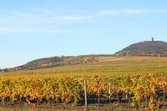 Agricultura Vrsac da estação do outono da paisagem do vinhedo Foto de Stock Royalty Free